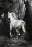 Fantasy Horses 34 Photographic Print by Bob Langrish