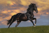 Fantasy Horses 40 Photographic Print by Bob Langrish