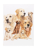 Golden Retriever Giclee Print by Barbara Keith