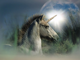 Unicorn 63 Photographic Print by Bob Langrish