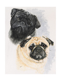 Pugs Giclee Print by Barbara Keith