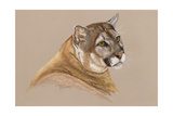 Cougar Giclee Print by Barbara Keith