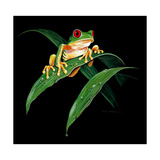 Tree Frog Giclee Print