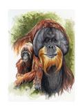 Orangutan Soul Giclee Print by Barbara Keith