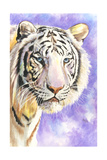 White Tiger Giclee Print by Barbara Keith
