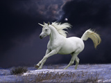 Unicorn 56 Photographic Print by Bob Langrish
