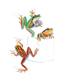 Frogs Giclee Print