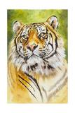 Sumatran Tiger Giclee Print by Barbara Keith