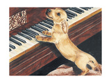 Dachsund Playing Piano Giclee Print by Barbara Keith