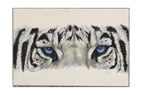 Eye-Catching White Tiger Giclee Print by Barbara Keith