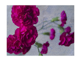 Vibrant Carnations Giclee Print by Bob Rouse