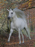 Unicorn 61 Photographic Print by Bob Langrish