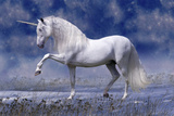 Unicorn 80 Photographic Print by Bob Langrish