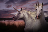 Unicorn 70 Photographic Print by Bob Langrish