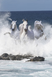 Storm Riders Photographic Print by Bob Langrish