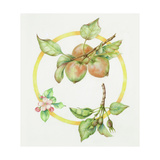 Apple Cycle Giclee Print by Deborah Kopka