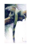 Iguana Giclee Print by Durwood Coffey