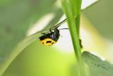 Ladybug Photographic Print by Gordon Semmens