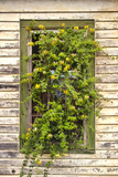 Window Flowers Photographic Print by Bob Rouse