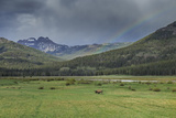 Yellowstone Bison with Rainbow Photographic Print by  Galloimages Online