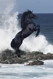Cavalli Stampa fotografica di Bob Langrish