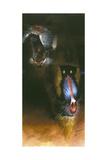 Baboon Scream Giclee Print by Durwood Coffey
