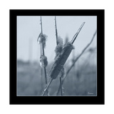 Ice Cattail 1 Giclee Print by Gordon Semmens