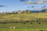 Lamar Valley - Pronghorn and Bison Photographic Print by  Galloimages Online