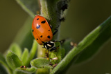 Lady Bug Photographic Print by Gordon Semmens