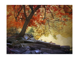 Under the Maple Tree Giclee Print by Jessica Jenney