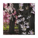 Japanese Cherry Giclee Print by Jessica Jenney
