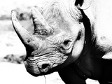 Rhinoceros Photographic Print by Gordon Semmens