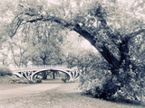Central Park Gothic Photographic Print by Jessica Jenney