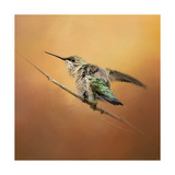 Hummingbird on Peach Giclee Print by Jai Johnson