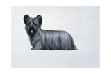 Sky Terrier Giclee Print by Harro Maass