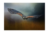Flight of the Harris Hawk Reproduction procédé giclée par Jai Johnson