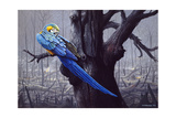 Blue and Yellow Macaw in Burned Forest Giclee Print by Harro Maass