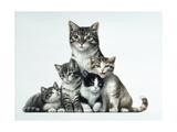 Cat Family Giclee Print by Harro Maass