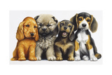 Young Dogs Giclee Print by Harro Maass