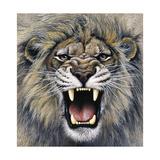 Lion Giclee Print by Harro Maass