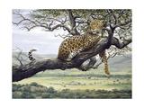 Leopard Giclee Print by Harro Maass
