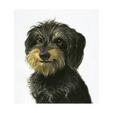 Dog Giclee Print by Harro Maass