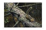 Eastern Chipmunk Giclee Print by Harro Maass
