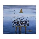 Tufted Ducks Giclee Print by Harro Maass