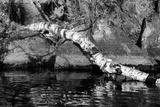 Ash River 11 Photographic Print by Gordon Semmens