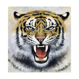 Tiger Giclee Print by Harro Maass
