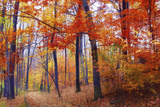 Autumn Woodland Photographic Print by Jessica Jenney