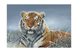 Tiger in Snow Giclee Print by Harro Maass