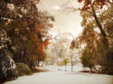 Autumn Greets Winter Photographic Print by Jessica Jenney