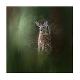 Woodsy Summer Fawn Giclee Print by Jai Johnson